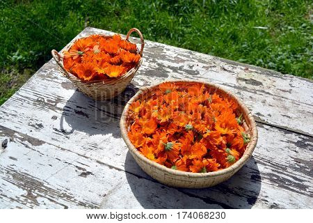 beautiful fresh medical marigold calendula flowers in two basket on white wooden old farm table