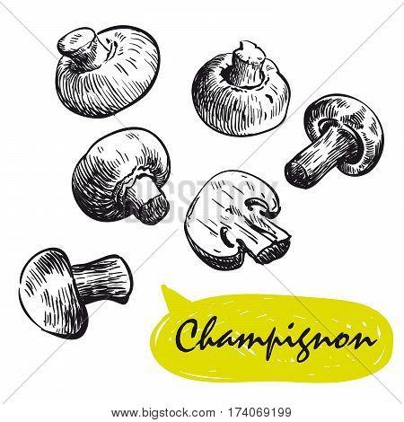 champignon. set of hand drawn vector sketches on a white background