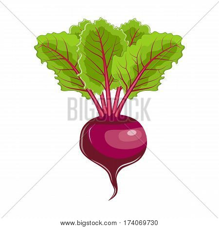 beet with leaves icon. Farm fresh beet product emblem for grocery shop, vegetarian vegetable juice label, sticker design. vector illustration in flat style