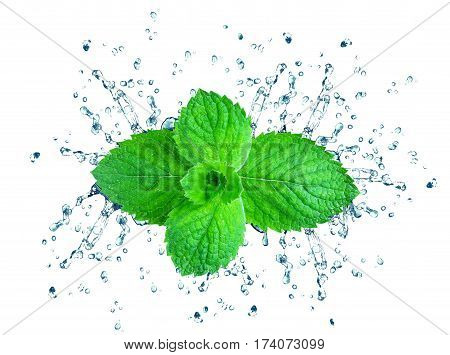 mint splash water isolated on a white background