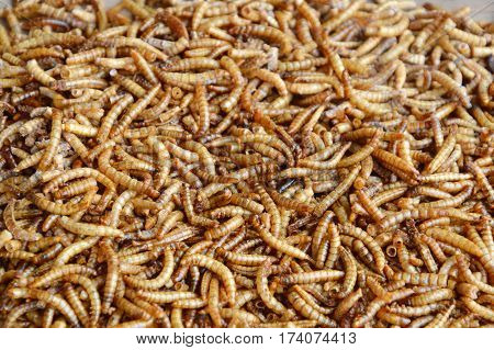 dried worm for feeding rodent or bird with lizard on wooden board