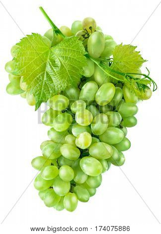 Fresh green grapes with leaf harvest fruit healthy food. Isolated on white background