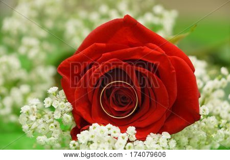Wedding ring embedded in red rose bud.