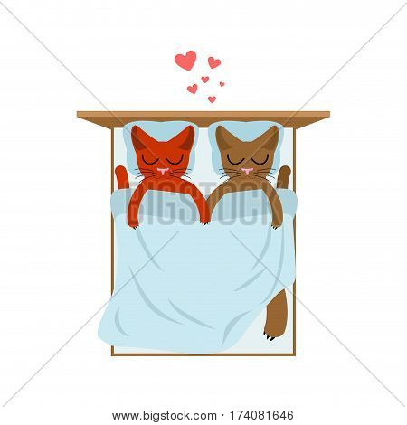Cat Lovers In Bed. Lover In Bedroom. Pet Romantic Date. Cats Lifestyle