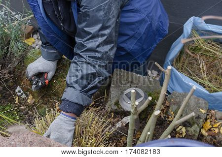 Woman with gloves and gardening tools when planting a flowerbed in autumn. Concept Gardening is healthy.