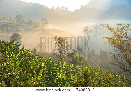 Beautiful scenery during time the sunrise view from below of Doi Luang Chiang Dao in the wildlife protected areas with banana trees.