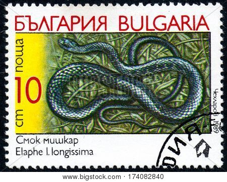 UKRAINE - CIRCA 2017: A stamp printed in Bulgaria shows the image snake with the description Elaphe l.longissima from the series Snakes circa 1989