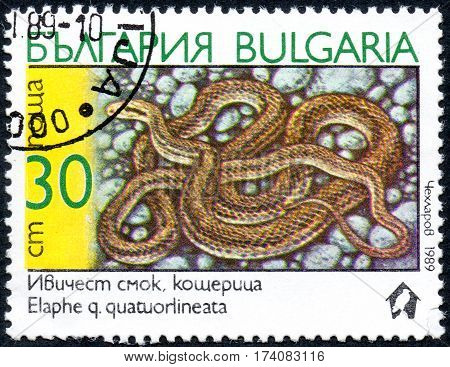 UKRAINE - CIRCA 2017: A stamp printed in Bulgaria shows the image snake with the description Elaphe quatuorlineata from the series Snakes circa 1989