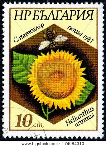 UKRAINE - CIRCA 2017: A stamp printed in Bulgaria shows the image sunflower and bee with the description Helianthus annuus circa 1987