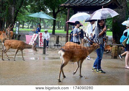 Traveler Thai Woman Holding Umbrella Walking With Deers While Raining For Visit And Travel In Kofuku