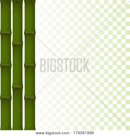 stalks of green bamboo on a transparent background. template. vector illustration