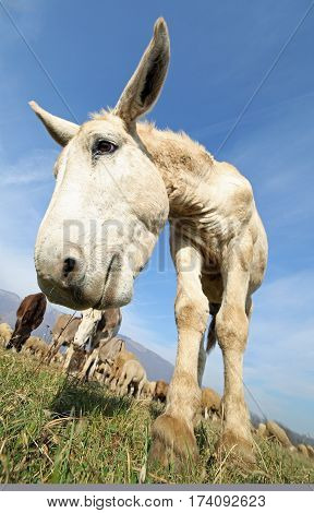 Donkey With Long Ears Photographed With A Fisheye Lens