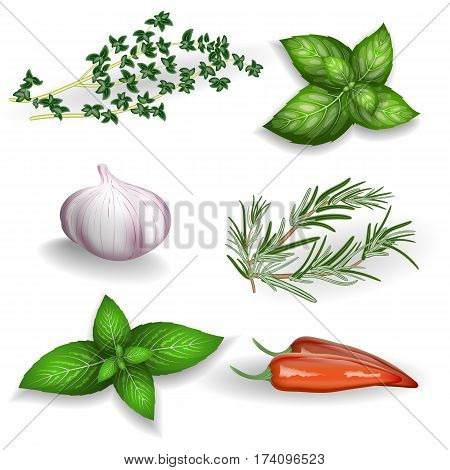 Set of fresh herbs seasonings and spices on a white background. For use as logos on cards in printing posters invitations web design and other purposes.