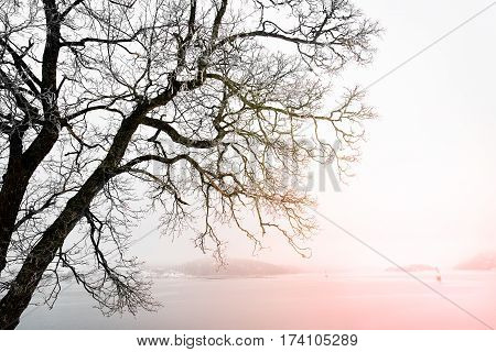 Silhoutte Of A Tree By The Coast Of Norway