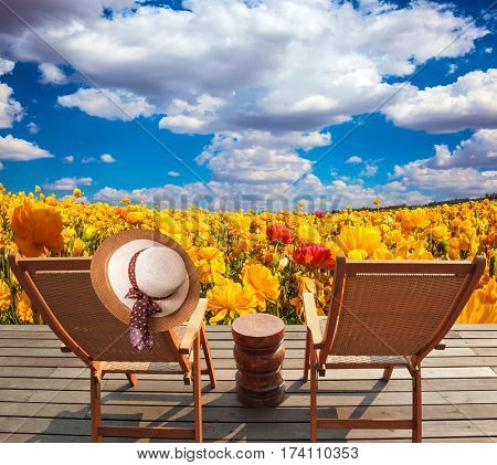 Pair of wooden comfortable sun loungers next to fields of garden buttercups. The concept of recreation and eco-tourism