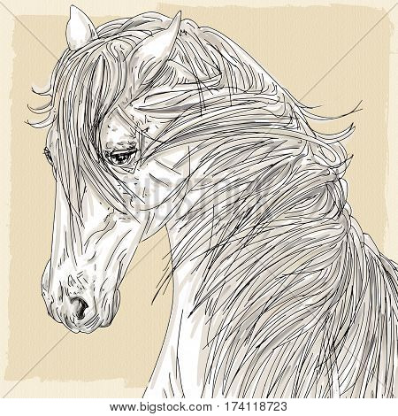 drawing of the head of a white horse with a thick mane and antique cream background.
