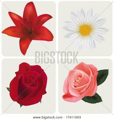 Vier schöne Blumen. Vektor.