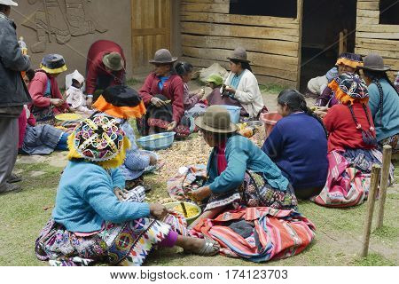 Indigenous women cutting potatoes for a local wedding ceremony Paru Paru the highest-altitude community in La Parque de la Papa Andes Mountain Peru