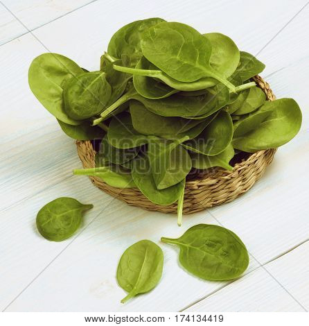 Arrangement of Small Raw Spinach Leafs in Wicker Plate closeup on Light Blue Wooden background. Retro Styled