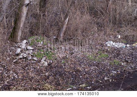 Garbage Dump In Old Park