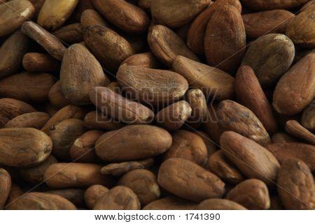 Cacao Beans Closeup2