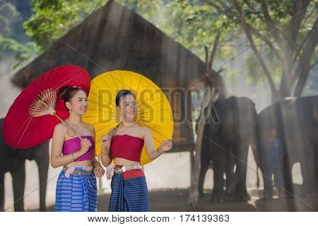 Beautiful girl Thai Lanna women in dress traditional costume with elephant in Chiang Mai Thailand