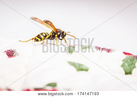 Hornet On A White Tablecloth
