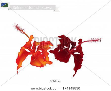 Solomon Flower Illustration of Hibiscus Flowers. The National Flower of Solomon Islands.