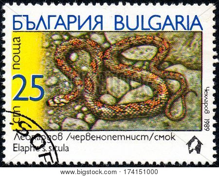 UKRAINE - CIRCA 2017: A stamp printed in Bulgaria shows the image snake with the description Elaphes s.situla from the series Snakes circa 1989