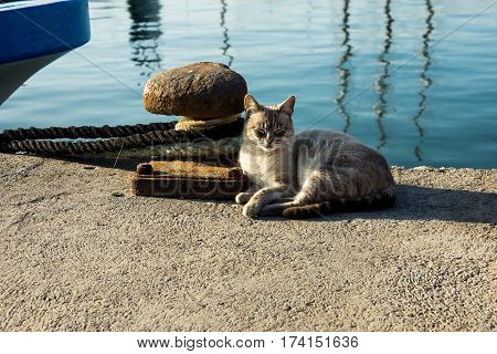 Squinting beach cat lying near rusty mooring bollard and fishing boat stern Torrevieja port Costa Blanca