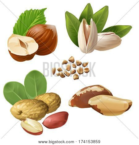 Set of vector icons of nuts - hazelnuts, brazil nuts, peanuts, pistachio and ground nuts isolated on white poster