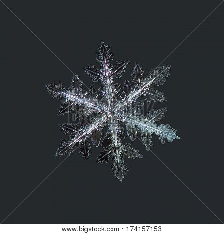 Macro photo of real snowflake: large snow crystal of stellar dendrite type with complex structure of six long arms, containing numerous side branches and icy leaves.
