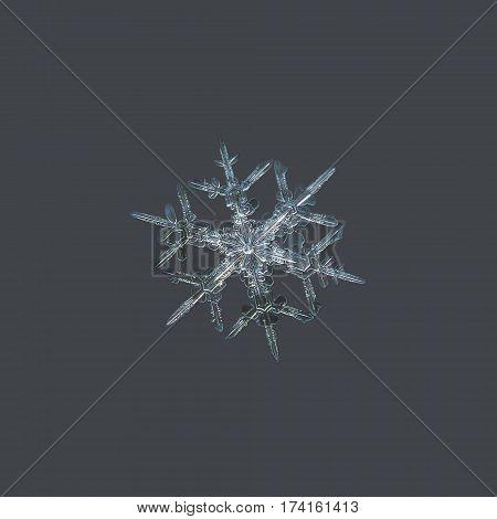 Macro photo of real snowflake: medium size snow crystal of stellar dendrite type with six ornate, sharp arms and bright center, glittering on dark gray background.