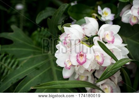 Fragile Praying Angels Orchids
