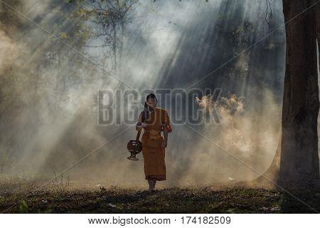 Novice pilgrimage to the forest aloneNovice monk went on a pilgrimage alone.