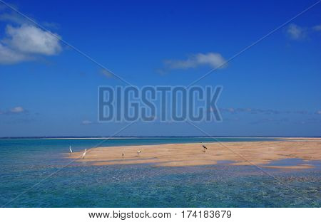 Some little egrets on a sand island under a blue clean sky in the bazaruto archipelago in Mozambique Africa
