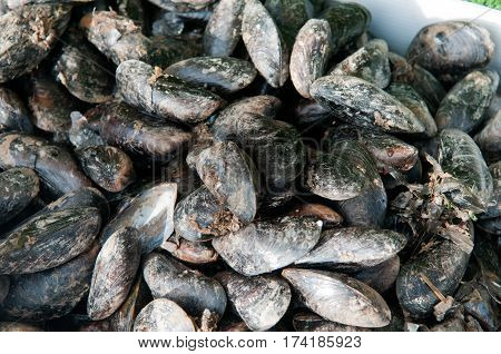 Fresh Mussels, Live Mussels Are For Sale At The Market