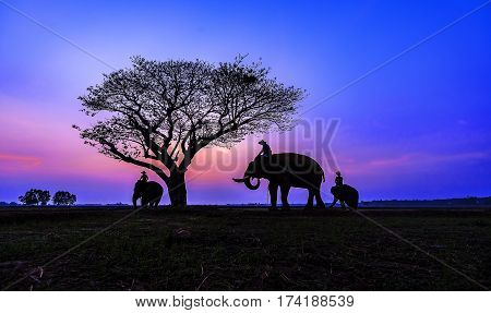 Thailand Elephant family at Safari Park .