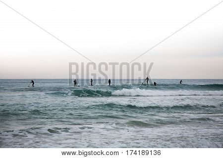 Group of surfers on paddleboards in the sea. Silhouettes of people on the SUP's in sea.
