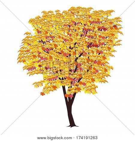 Chestnut in the fall with yellow and red leaves