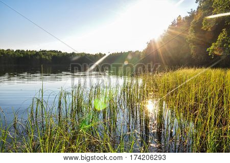 Lake Overgrown With Grass At Sunset. Sunshine Rays, Beautiful Water. Natural Landscape.