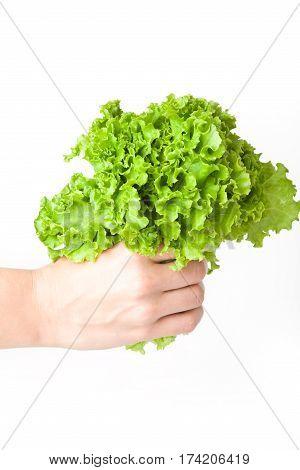 Fresh lettuce in the girl's hand on white