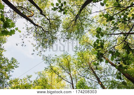 Summer nature tree tops are illuminated by the setting sun. Summer time. Dark summer forest. Clear summer sky. Summer background. Summer photo