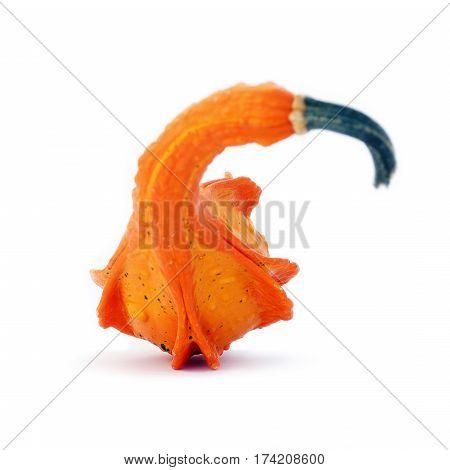 Vividly Orange Unusually Shaped Autumn Squash