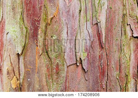 Fragment of yew tree bark. Good to use as natural abstract background.