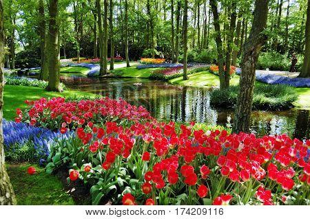 Colorful flowers and blossom in dutch spring garden Keukenhof (Lisse Netherlands)
