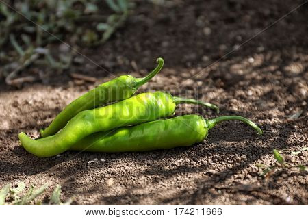 Green hot chili peppers lying on the ground