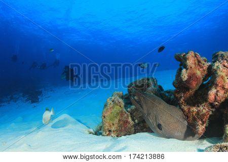 Scuba dive moray eel coral reef