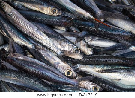 Bunch of fishes on seafood market. Fresh sea fish for sell. Small mackerel pile top view photo. Mackerel image for product package or food design. Raw fish cooking ingredient. Seaside food for cook