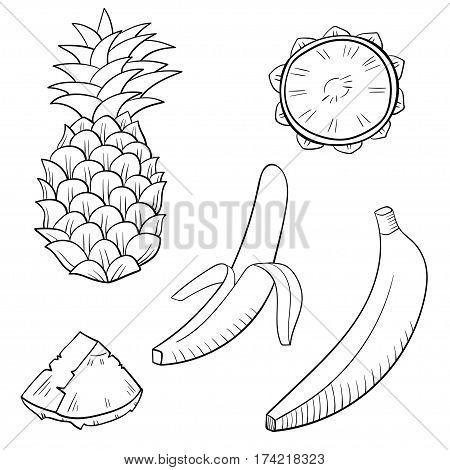Vector illustration with juicy tropical fruits: banana and pineapple. Outline drawing of fruits isolated on white.